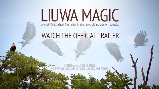 Trailer - Liuwa Magic