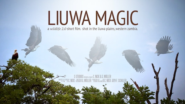 Liuwa Magic