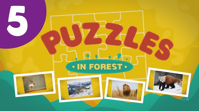 Puzzles in the Forest (ep5) Let's try and solve five different puzzles!