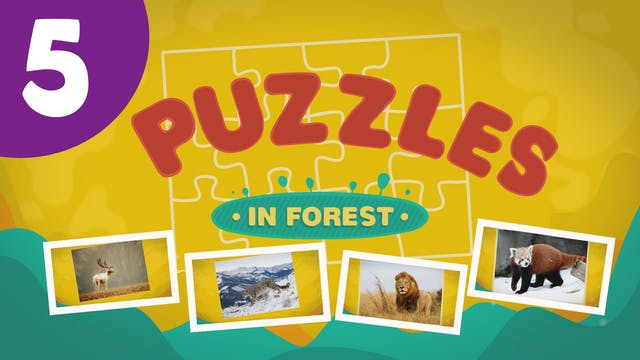 Puzzles in the Forest (ep5) Let's try...