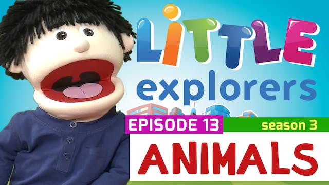 Little Explorers - S3 EP13 Animals