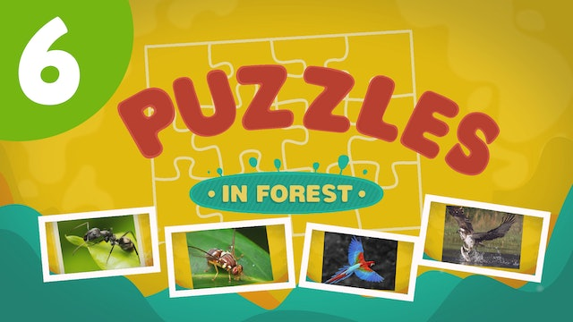 Puzzles in the Forest (ep6) Let's try and solve five different puzzles!
