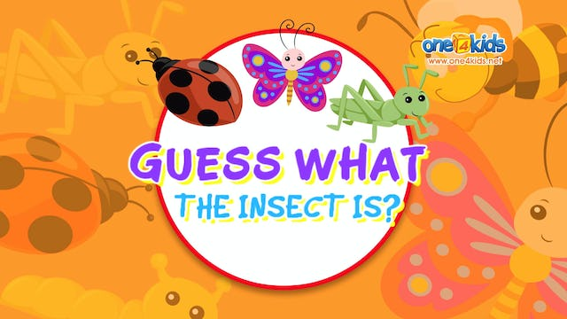 Guess What the Insect is?