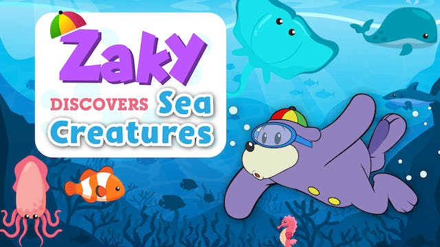 Zaky Discovers Sea Creatures