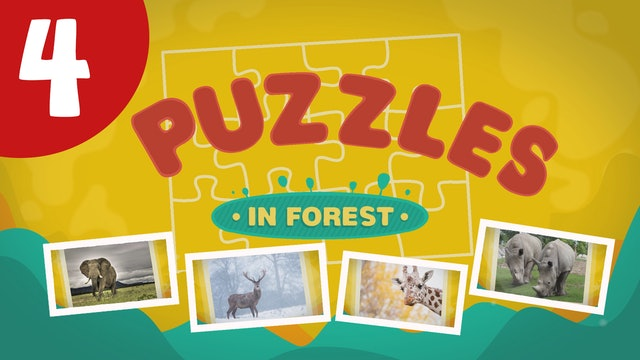 Puzzles in the Forest (ep4) Let's try and solve five different puzzles!