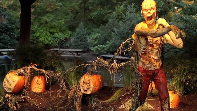 Zombie Pumpkins