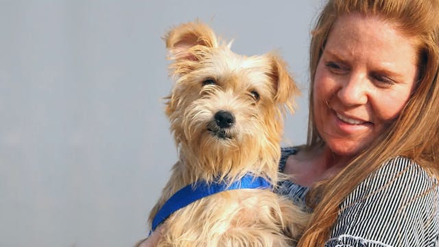 A Dog's Journey Home E8 : Reunions in...