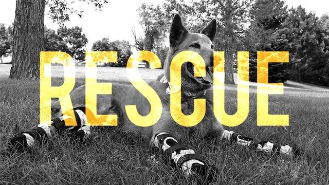 RESCUE: Pets & Animal Advocacy