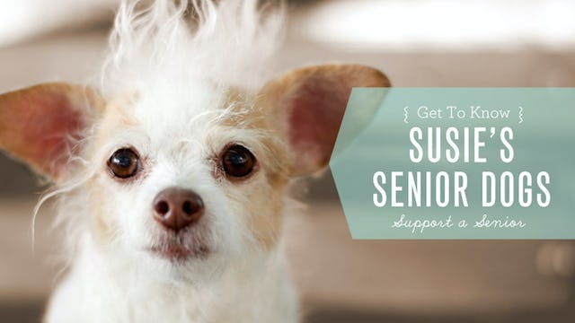Senior Dogs Find Homes