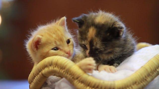 Purrfect Partnership: Seniors and Kittens