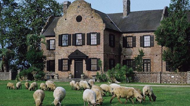 Middleton Place Plantation