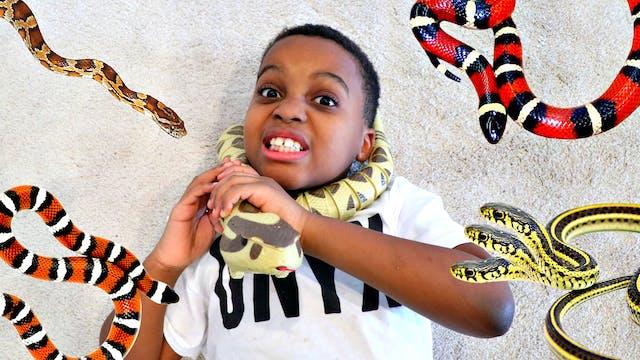 Cobra Snake Attacks!