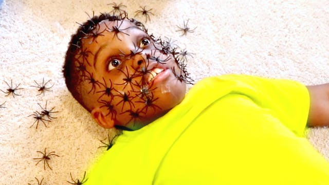 Spiders on Shiloh's Face!