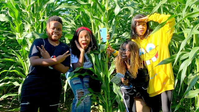 Surviving A Giant Corn Maze