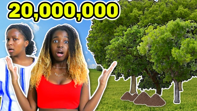 WE PLANT 20 MILLION TREES IN OUR BACKYARD?