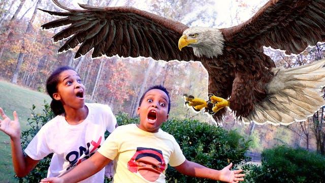 Shiloh vs EAGLE!