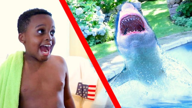 Shark In the Pool!