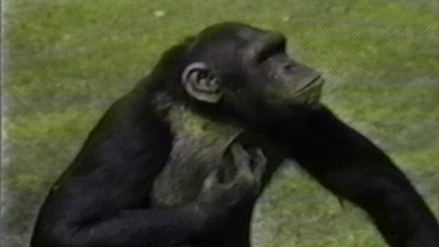 Chris Marker's Bestiary: Zoo Piece