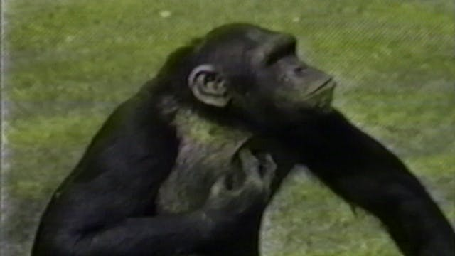 Chris Marker's Bestiary: Zoo Piece