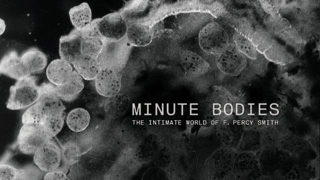 Minute Bodies: The Intimate World Of ...