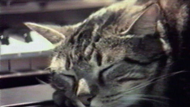 Chris Marker's Bestiary: Cat Listenin...