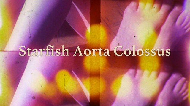 Starfish Aorta Colossus