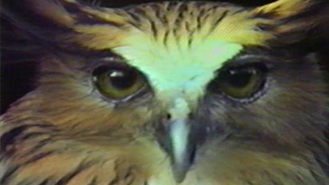 Chris Marker's Bestiary: An Owl is an...