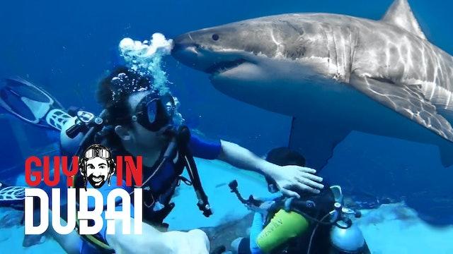 Shark Encounter on Shipwreck Dive
