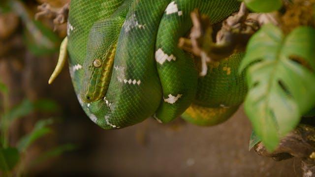 Saving Reptiles
