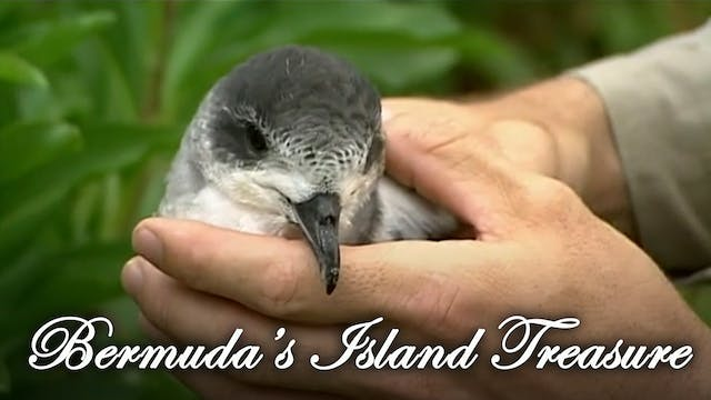 Bermuda's Island Treasure