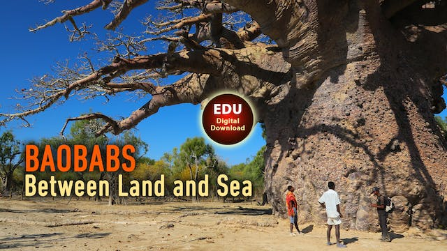 BAOBABS Between Land and Sea - EDU