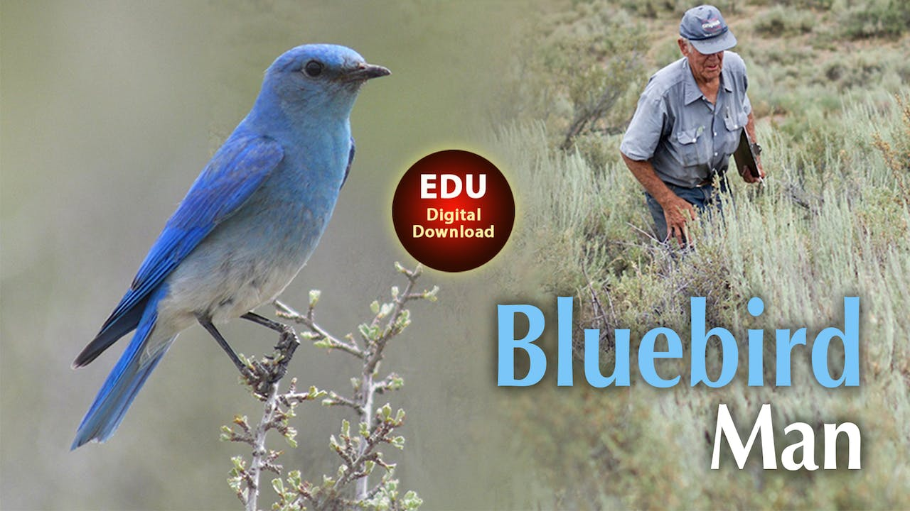 Bluebird Man - EDU