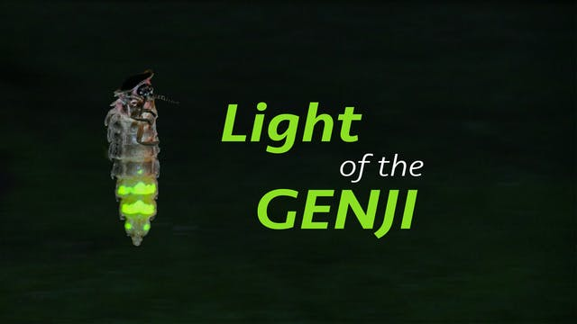 Light of the Genji