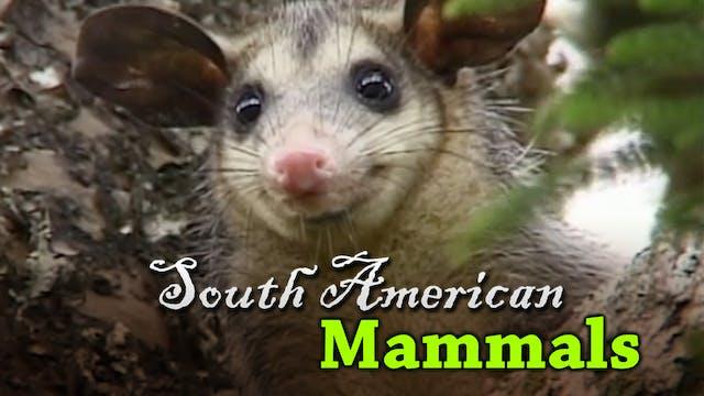 South American Mammals