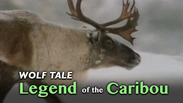 Wolf Tale: Legend of the Caribou