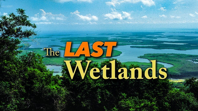 The Last Wetlands