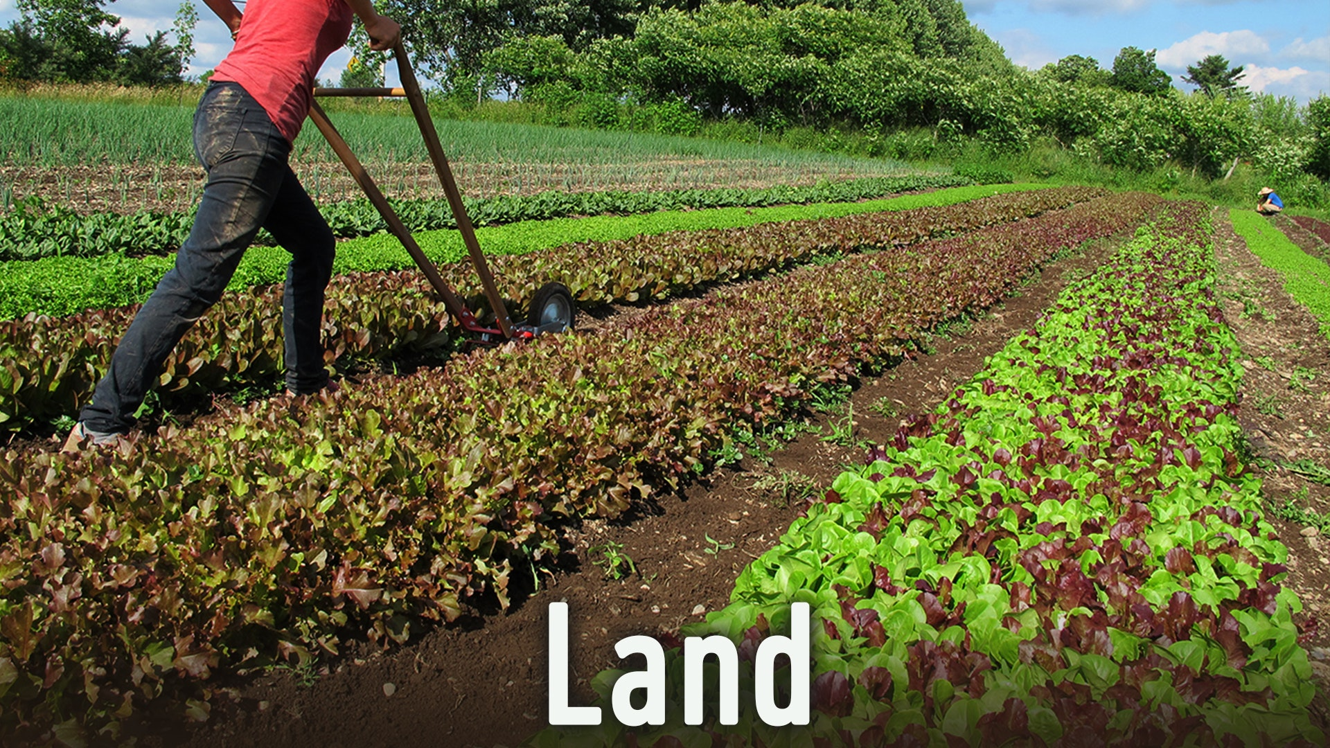 soil and land resources of the Soil conservation is the preventing of soil loss from erosion or  by the us natural resources  name and value the land and what we call it and.