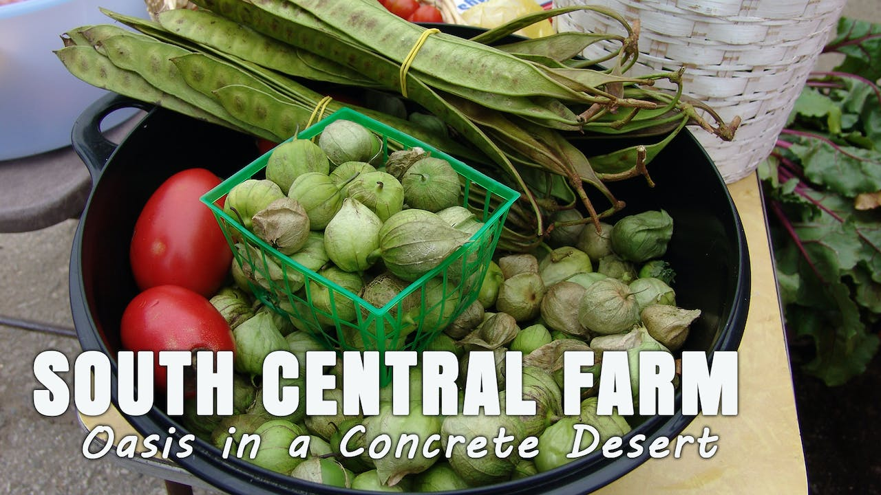 South Central Farm: Oasis in a Desert