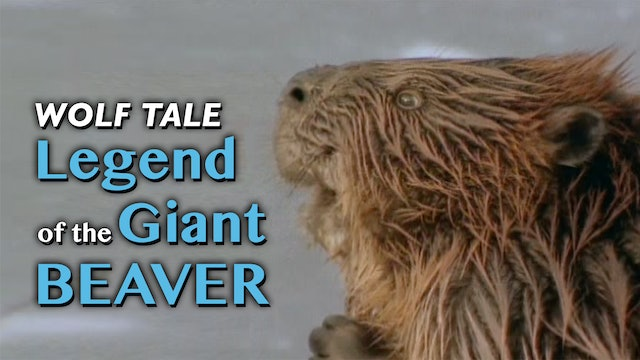 Wolf Tale: Legend of the Giant Beaver