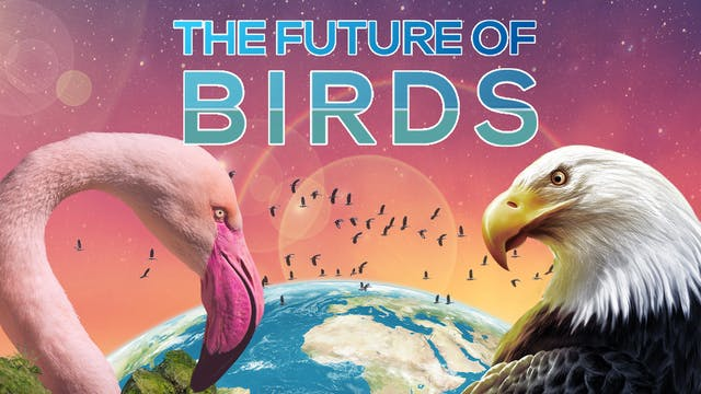 The Future of Birds