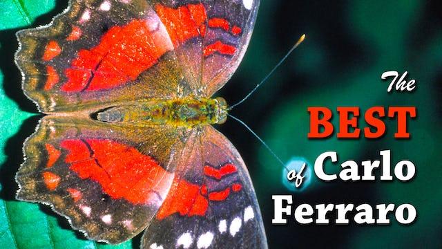 The Best of Carlo Ferraro