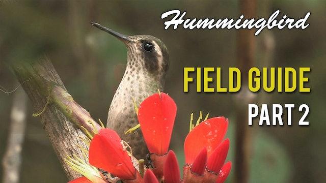 HUMMINGBIRD Field Guide: Part 2