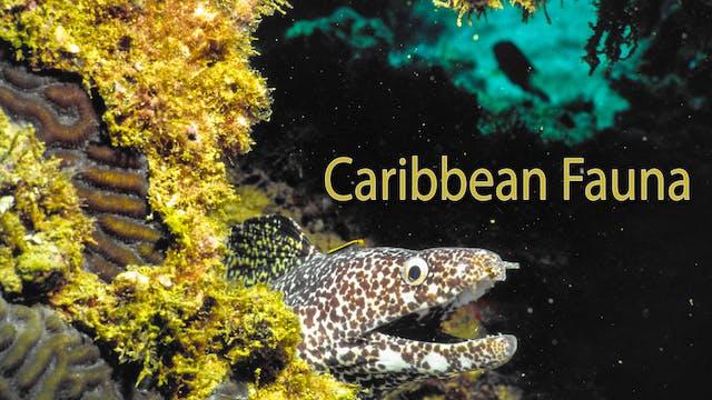 Caribbean Fauna