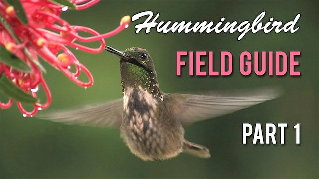 HUMMINGBIRD Field Guide: Part 1