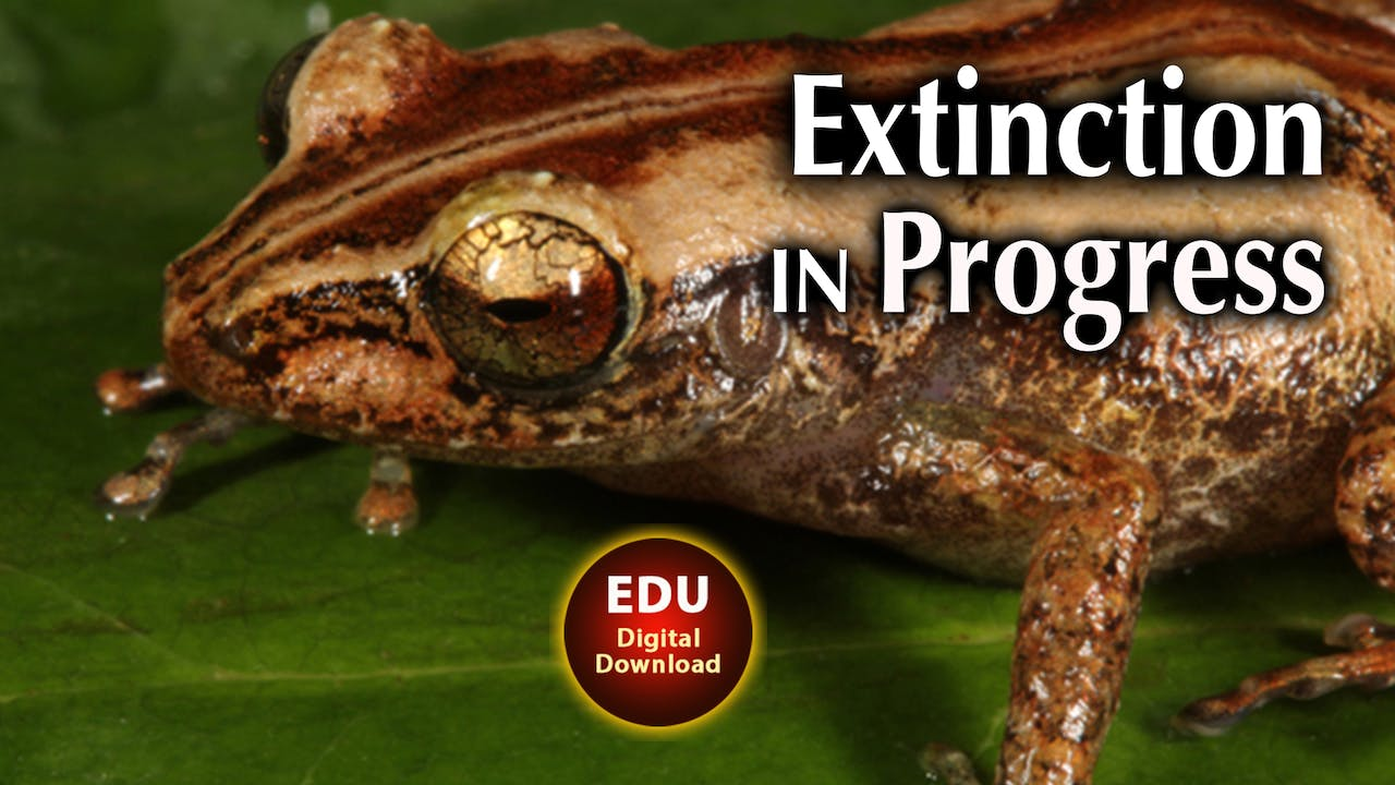 Extinction in Progress - EDU