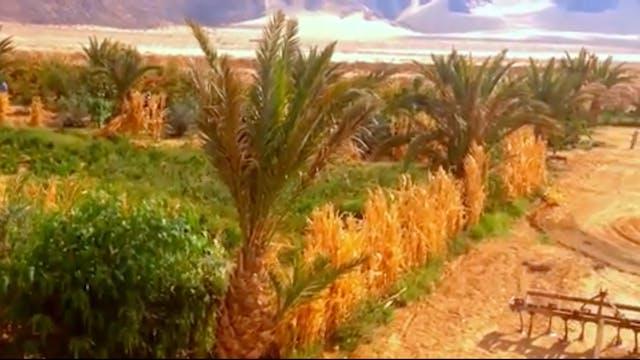 Abundance in a Dry Land