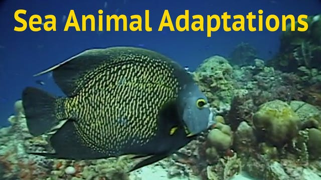 Sea Animal Adaptations