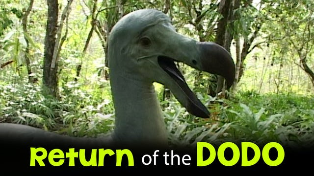 Return of the Dodo
