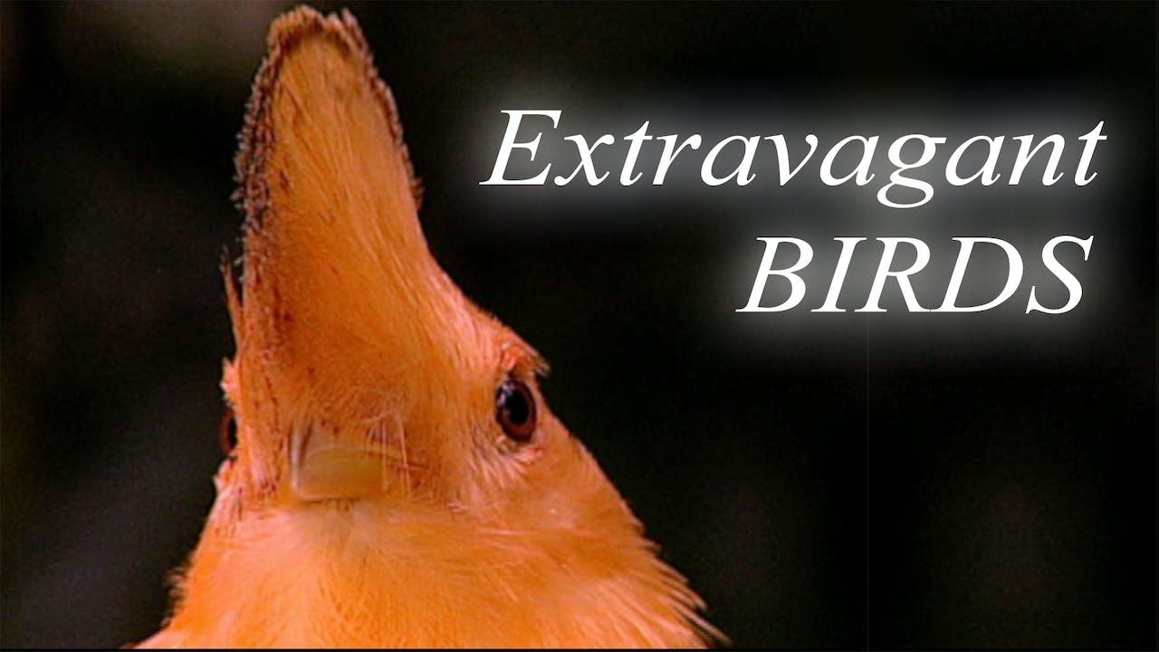 EXTRAVAGANT BIRDS