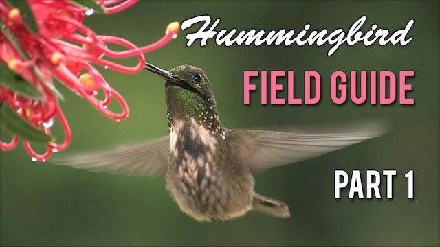 HUMMINGBIRD Field Guide: Part 1
